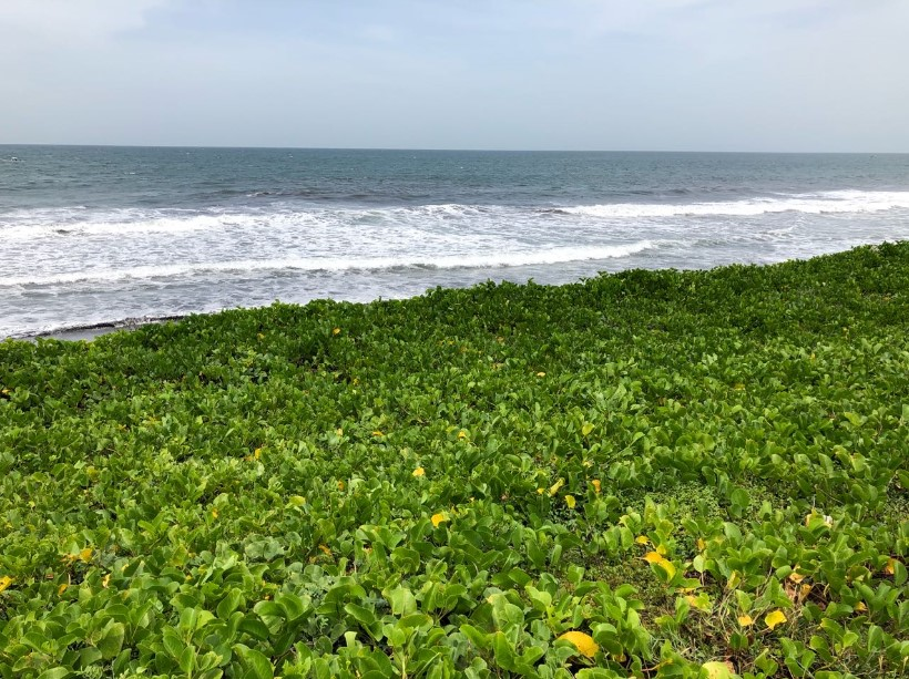 Terreno frente al mar a inicio de Monterrico