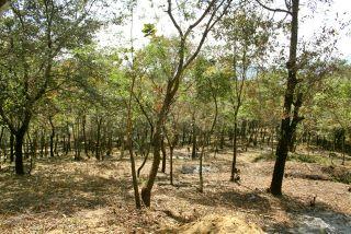 Terreno de 17,055 vrs2 en Choacorral San Lucas